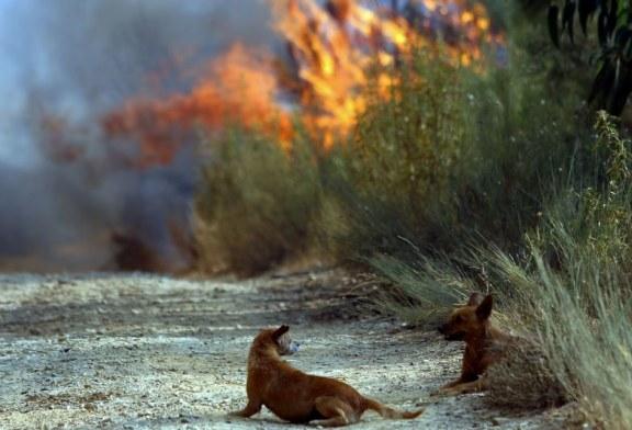 Cinco pessoas detidas em flagrante delito por incêndio florestal